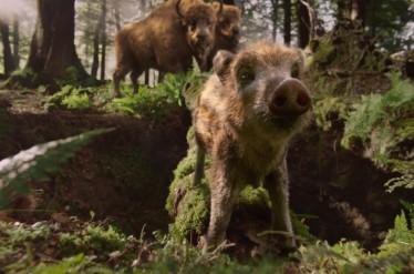 Żubr - Boars