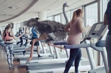 Biedronka - Ostrich